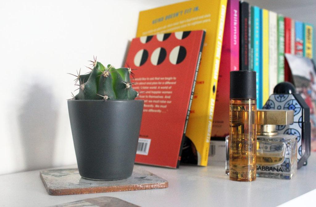 cactus on shelf